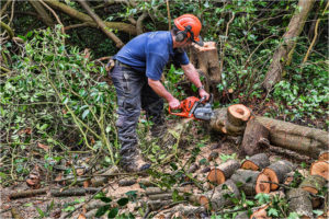 Tree Felling Glenvarloch