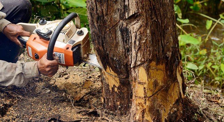 What's tree felling