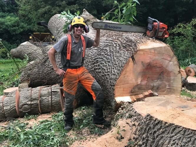 Why is tree removal so expensive