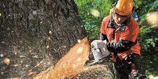 Tree felling South Africa