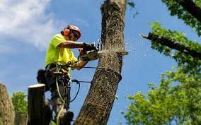 What does felling trees mean