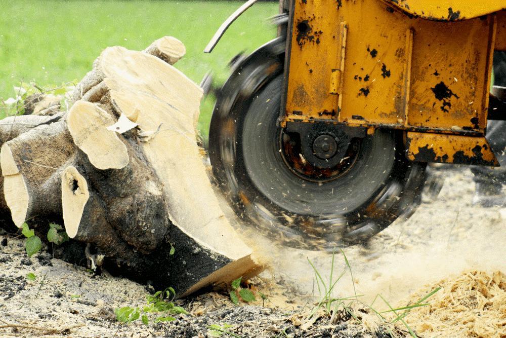 Stump grinding Pretoria