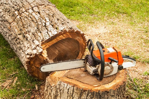 Tree root removal cost