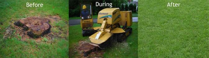 Stump grinding rental