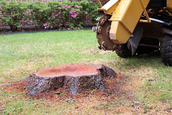 Stump grinding vs removal
