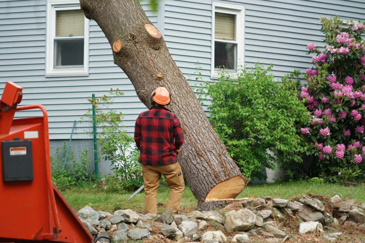 Tree root removal without killing tree