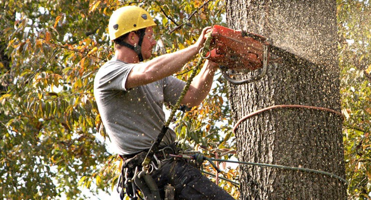 What is felling a tree