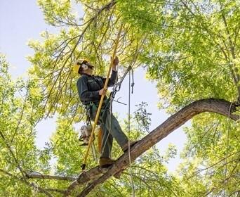 Tree pruning prices