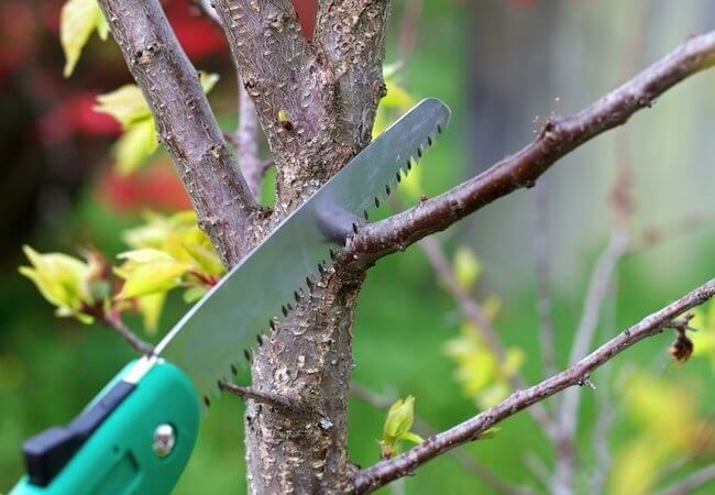 Tree pruning when