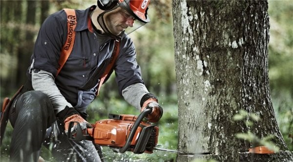 What is the impact of cutting down trees