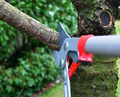 When should a tree be pruned