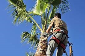 Palm cutting