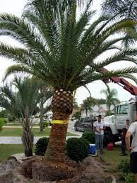 Palm tree cutting prices