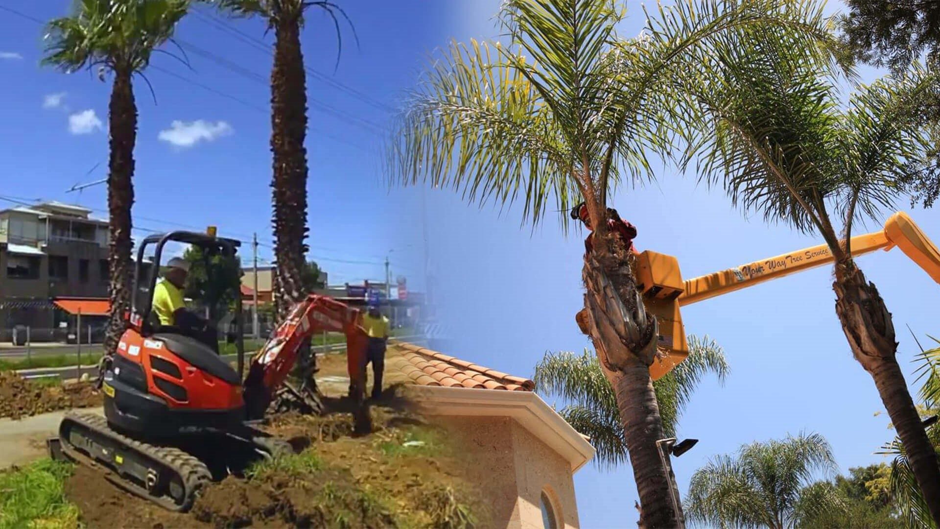 Palm tree cutting service