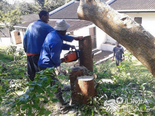 What is tree felling