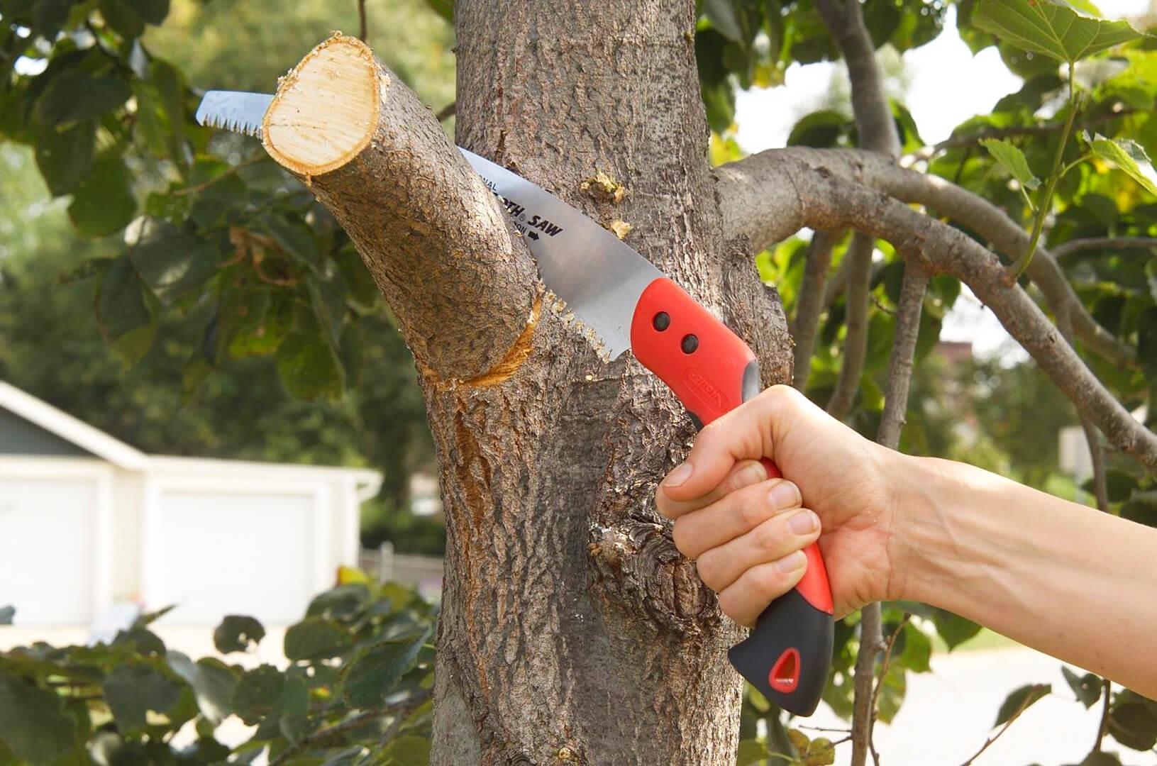 How much should tree trimming cost