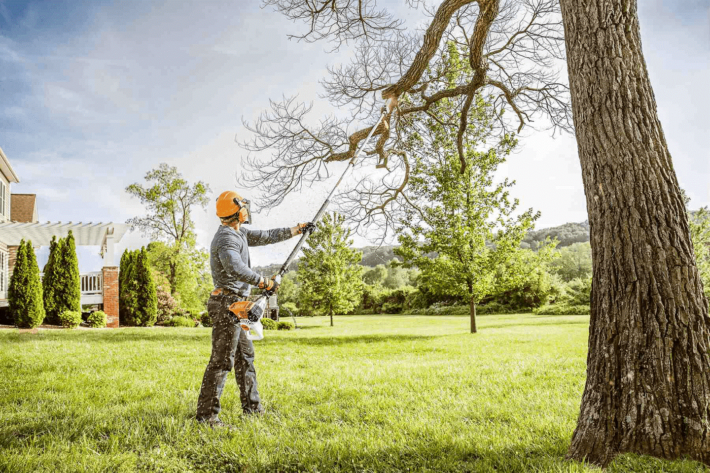 What is tree trimming called