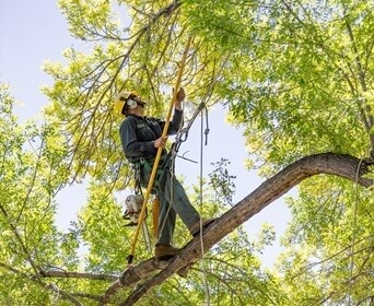 Who is responsible for trimming trees hanging over fence